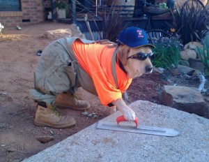 cute-dog-construction-worker